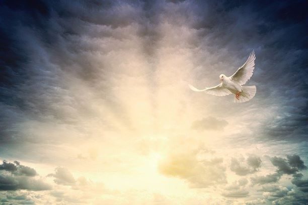 holy spirit christ jesus dove light love